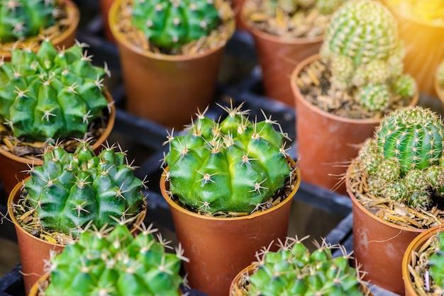 Kleine cactus in een pot