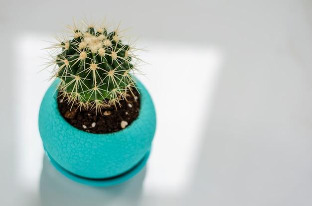 Kleine cactus in een turquoise bloempot op een wit marmer. ruimte kopiëren. kamerplanten concept.