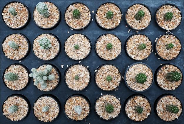 Kleine cactus in pot op bovenaanzicht.