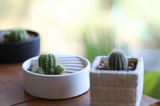 Kleine cactus in witte potten op buiten