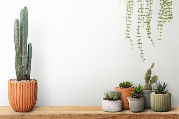 Kleine cactussen met een witte muurachtergrond