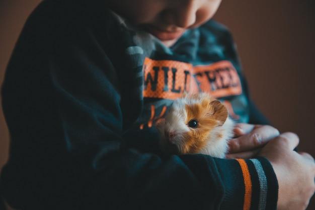 Kleine cavia in de handen van het kind