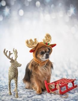 Kleine chihuahua voor winter achtergrond