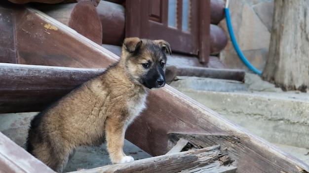 Kleine dakloze pup op de trap in de buurt van het huis in het dorp. een kleine grappige hond bewaakt het huis.