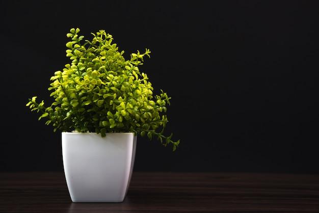 Kleine decoratieve boom