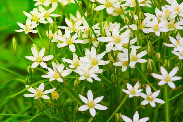 Kleine delicate witte zomerbloemen
