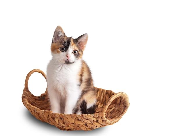 Kleine driekleurige kitten met een kom isoleren op een witte achtergrond