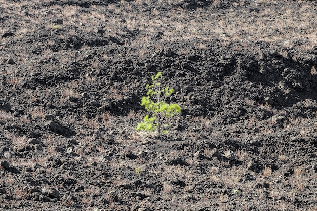 Kleine eenzame boom hoekmening