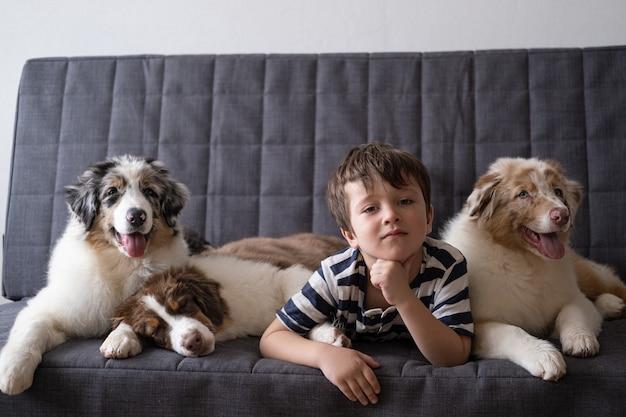 Kleine ernstige jongen met drie kleine schattige australische herder rode drie kleuren blauwe merle puppy hondje. liefde en vriendschap tussen mens en dier.