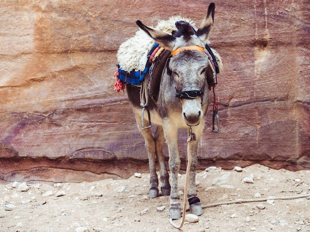 Kleine ezel op de achtergrond van de rots