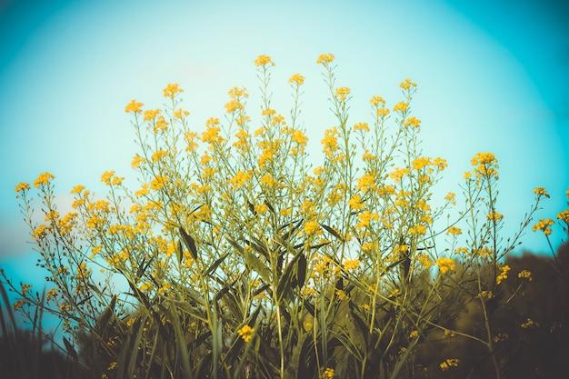 Kleine felgele bloemen op slanke groene stengel op een achtergrond van blauwe luchtreiniging