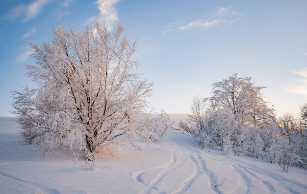 Kleine fragiele boom bedekt met rijm eenzaam groeit uit een sneeuwbank tegen winterbergen. concept van een uitstervend bos en slechte ecologie