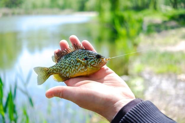 Kleine gekleurde vis in de handen van de visser