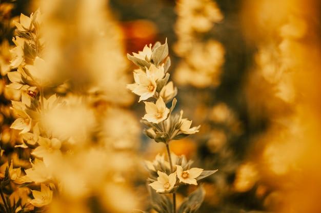 Kleine gele bloemen in de tuin