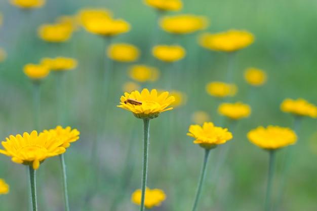 Kleine gele bloemen op een licht