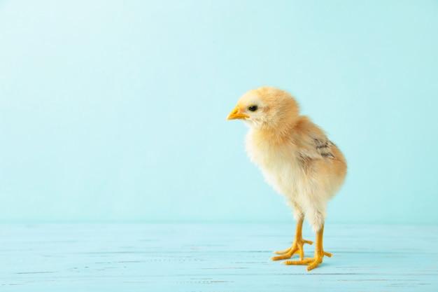 Kleine gele kip op de blauwe houten achtergrond