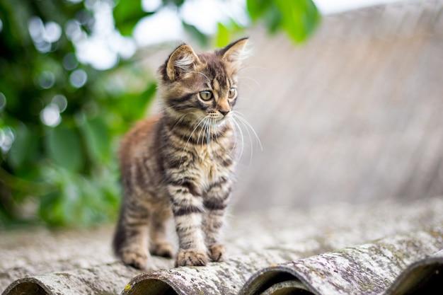 Kleine gestreepte kat zittend op het dak van het huis