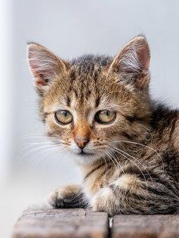 Kleine gestreepte kitten close-up op een onscherpe achtergrond