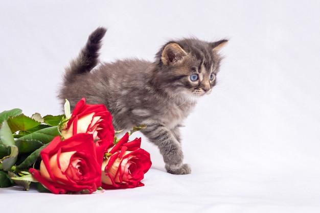 Kleine gestreepte kitten in de buurt van een bos van rode rozen. bloemen voor groeten op de dag van geboorte