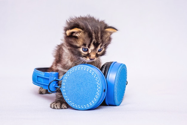 Kleine gestreepte kitten met koptelefoon. muziek in het dagelijks leven. luister naar je favoriete muziek