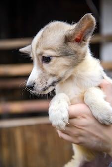 Kleine grappige schattige bastaardhond in menselijke handen close-up op het platteland