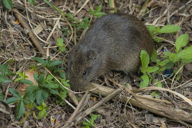 Kleine grijze dennenmuis op de grond in de buurt van de groeiende planten