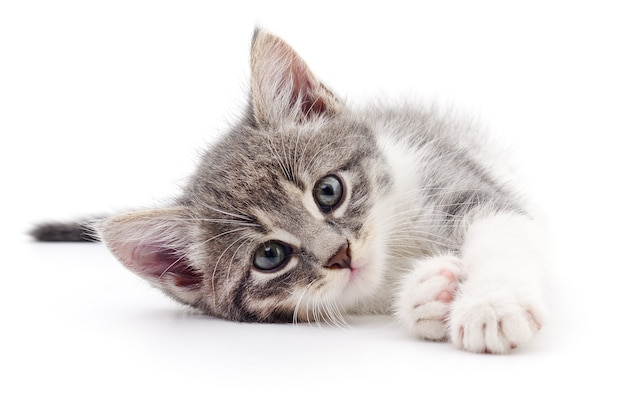 Kleine grijze kitten geïsoleerd op een witte achtergrond.