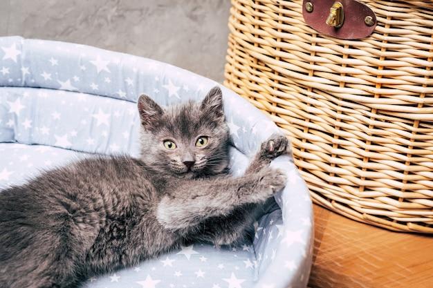 Kleine grijze kitten. huisdier. detailopname