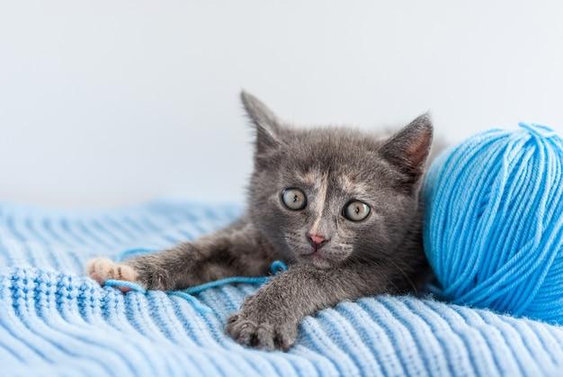 Kleine grijze kitten ligt op een blauwe gebreide stof met bolletje draad
