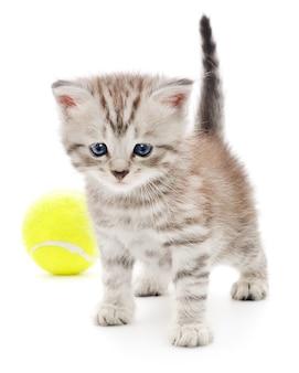 Kleine grijze kitten met tennisbal op wit.