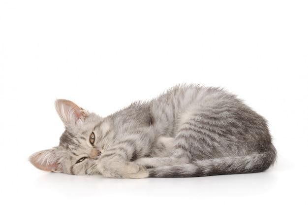 Kleine grijze kitten op een wit