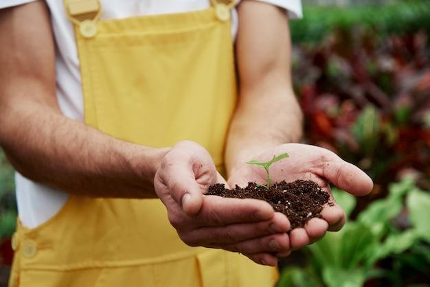 Kleine groeiende bloem. mannenhanden die de grond vasthouden met een plantje in het midden.