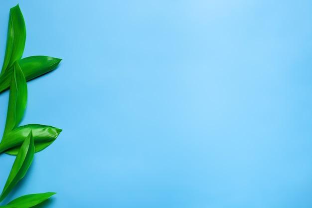 Kleine groene bladboeketten van lelietje-van-dalen als bloemenrand aan de linkerkant met kopie spa...