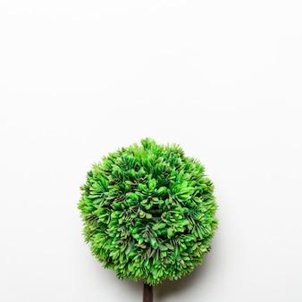 Kleine groene decoratieve boom