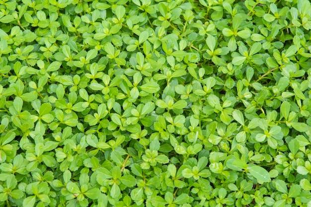 Kleine groene planten. op de grond en en achtergrond