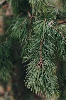 Kleine groene sparren in het park close-up