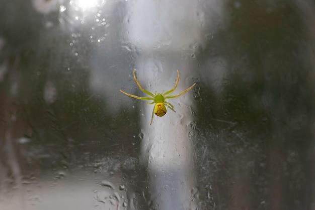 Kleine groene spin op een plastic fles