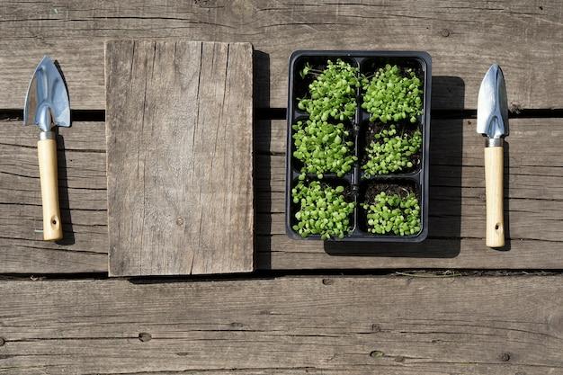 Kleine groene tabak zaailing in plastic potten en een stalen schop op rustieke houten achtergrond.