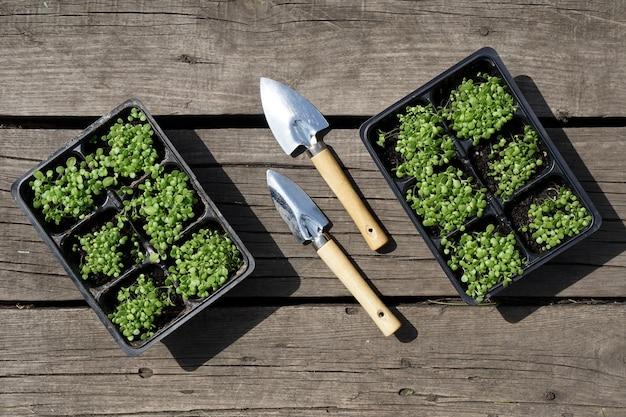 Kleine groene tabak zaailing in plastic potten en een stalen schop op rustieke houten tafel