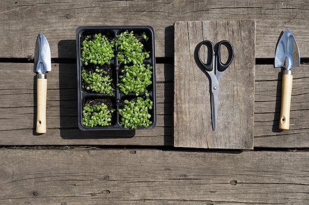 Kleine groene tabak zaailing in plastic potten en een stalen schop, schaar op rustieke houten achtergrond.