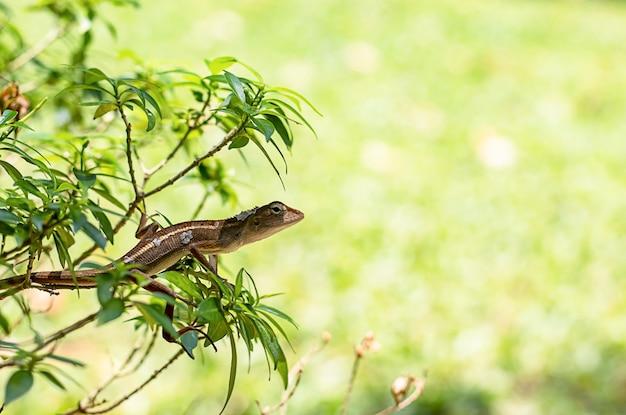 Kleine hagedistakken met lange staart werpt op de boom af.