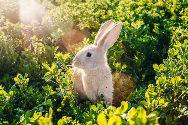 Kleine harige konijn in het gras
