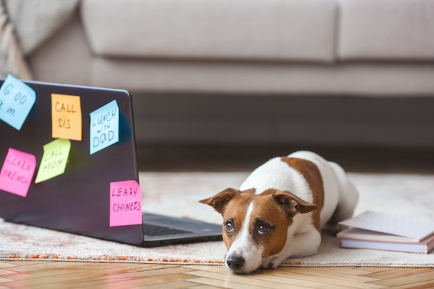 Kleine hond binnen. mooie puppy met pc. huisdier op laptop werkt. hond mist zijn eigenaar. jack russel terrier alleen bij de computer. drukke hond.