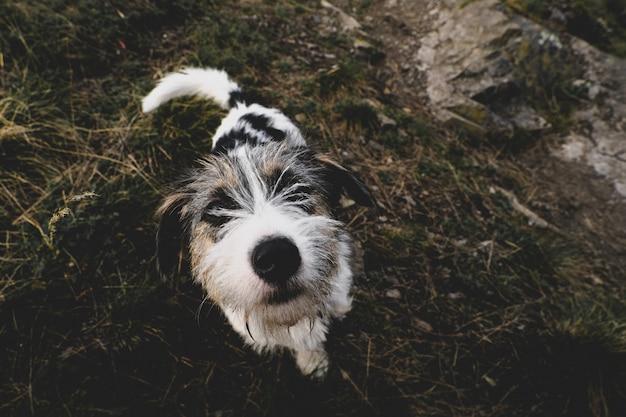 Kleine hond die het vriendschappelijke kijken in de cameralens loopt.