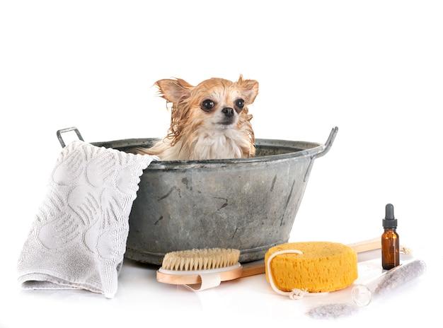 Kleine hond en bad