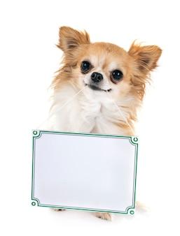 Kleine hond en plank
