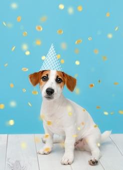 Kleine hond in een feestmuts met confetti