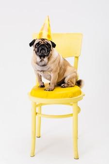 Kleine hond in feestmuts zittend op een stoel