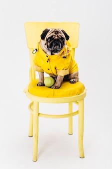 Kleine hond in gele kleren die op stoel zitten