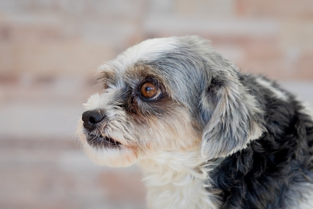 Kleine hond met droevige uitdrukking